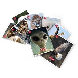 Quaderni A4 Animal World Pigna - A4 - C (righe) - 40+R ff - 02243690C (conf.10)